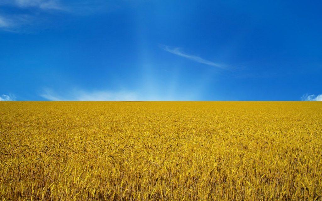 Кафедра ПЕЕА вітає вас з днем Днем державного прапора України